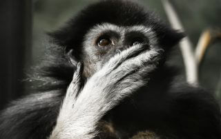 Qi Gong - Jaag de aap weg / Repulse the Monkey