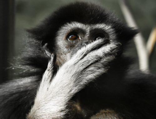 QiGong/Tai Chi – Jaag de aap weg